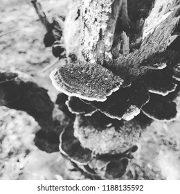 Fungus on tree at the park black and white