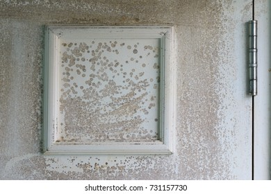 Fungus on white Wooden in home care and property industrial concept