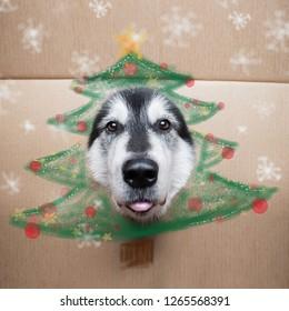 funny alaskan malamute dog with cardboard cristmas tree on the head