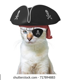 Funny animal costume of a cat pirate captain wearing a tricorn hat and eyepatch with skulls and crossbones, isolated on a white background
