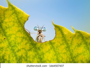 funny animal looks out of the letter. A funny dragonfly with big eyes on a cool colored background. Macro nature image