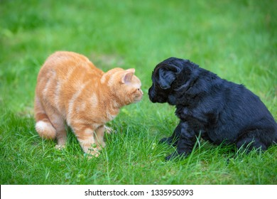 Funny animals. Little puppy and kitten playing outdoors in the grass in summer