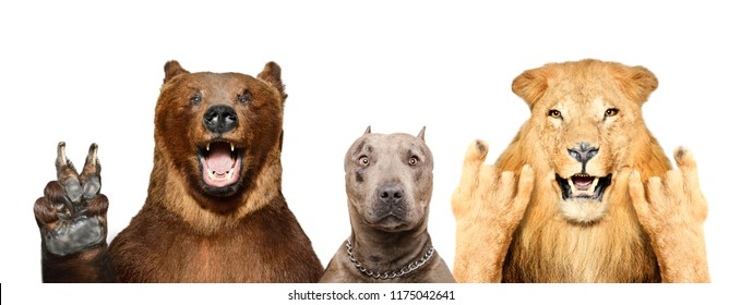 Funny animals showing gestures, isolated on white background