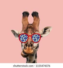 Funny art collage. Giraffe wearing sunglasses.