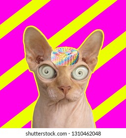 Funny art collage. Sphynx cat with cake hat.