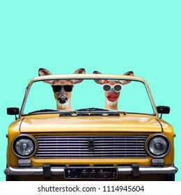 Funny art collage. Two happy deers in the car go for vacations