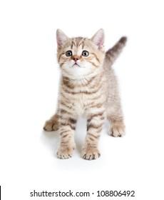 funny baby cat kitten on white background