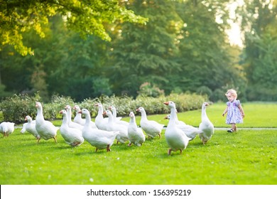 Funny baby girl chasing wild geese in a park on a beautiful sunny autumn evening