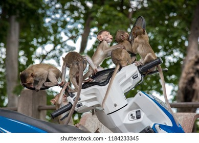 Funny baby monkeys play and enjoy with motercycle.