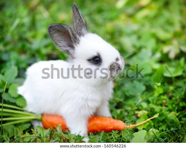 Bambino divertente coniglio bianco con una carota in erba