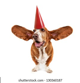 a funny basset hound with a birthday hat on