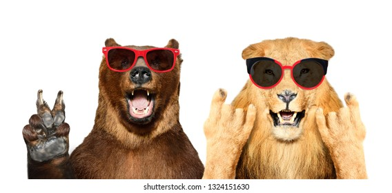 Funny bear and lion in sunglasses showing gestures, isolated on white background