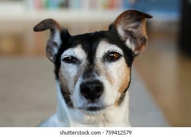 Funny beautiful dog.