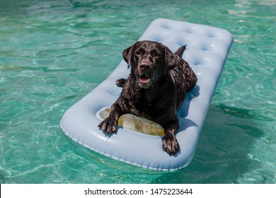 Small Dogs Stock Photos, Images & Photography | Shutterstock