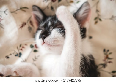 Funny black and white tuxedo kitten lazily sleeping at the bed