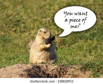 Funny black-tailed prairie dog looking for a fight with fists up in the air, speech bubble