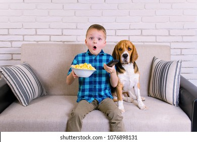 funny boy and dog beagle watching TV and eating popcorn on the sofa
