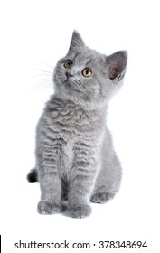 Funny British kitten isolated on white background