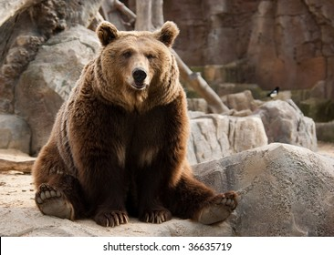 Funny brown bear and a bird on the background