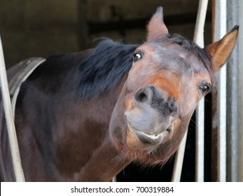 Funny brown horse in stable