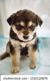 Funny brown puppy mixed breed.