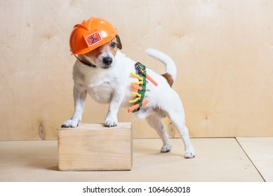 Funny builder wearing toolbelt and hardhat at construction site