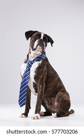 Funny business dog