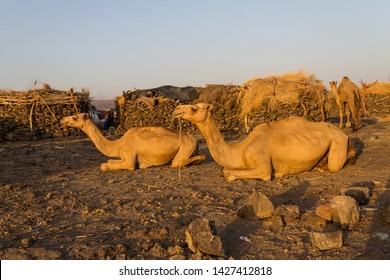 Working Camel Images, Stock Photos & Vectors | Shutterstock