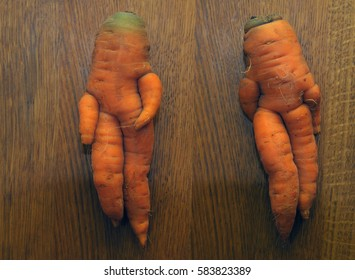 Funny carrot series