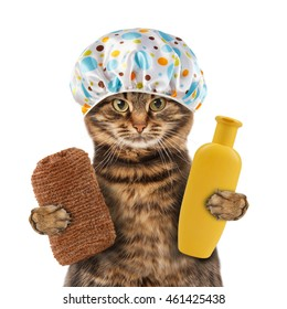 Funny cat with accessories for bathtub on white background.  It is going to washing. It is holding a sponge and bottle of shampoo and wearing a shower cap.