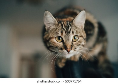 Funny cat with big eyes. Close portrait