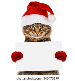 Funny cat in christmas hat holding white banner