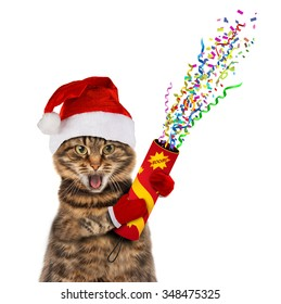 Funny cat in christmas hat with petard.