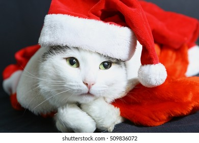 funny cat in christmas new year hat and coat close up photo on black background