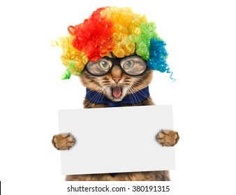 Funny cat in costume clown. White label for text