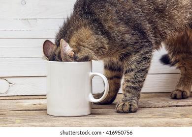 Funny cat crawled into a white coffee mug. Design a coffee mug