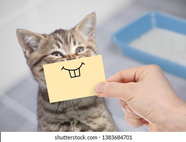 funny cat with crazy smile sitting near clean toilet