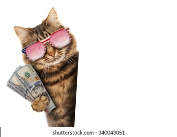 Funny cat - currency exchange rate. Business scene.