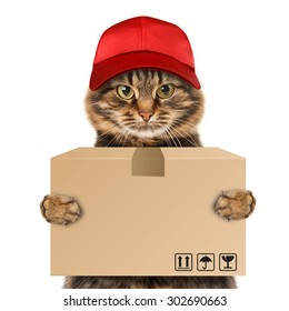 Funny cat - delivery service. Postman delivering a big package