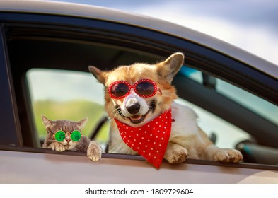 funny cat and dog in sunglasses stuck their muzzles and paws out of the car window during a trip out of town