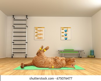Funny cat is doing exercise - scissor crunches. Fitness club.