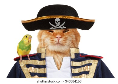 Funny cat is dressing in caribbean pirate costume. A parrot sits on his shoulder.