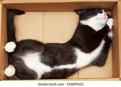 Gato engraçado enche o volume da caixa. A ponta da cauda a 90 graus.