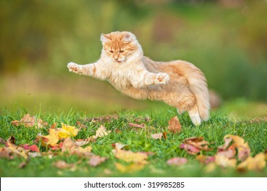 Funny cat flying in the air in autumn