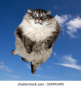 funny cat flying in the clouds blue sky