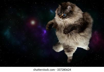 funny cat flying in galaxy