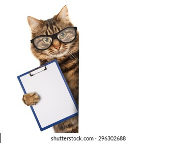 Funny cat with a folder for presentations. Business scene.