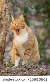 Funny cat in the garden looks like a meme
