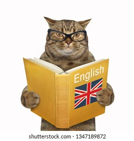 The funny cat in glasses is holding a open english book. White background. Isolated.