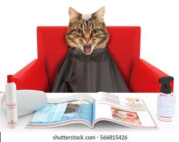Funny cat at the hairdresser on the white background. The hairdresser is making a mistake. Cat with the bald head. Shocking emotions.